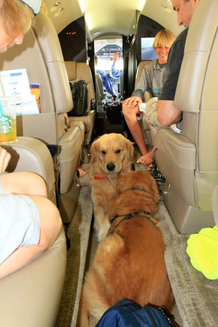 Pet's on a Charter Flight