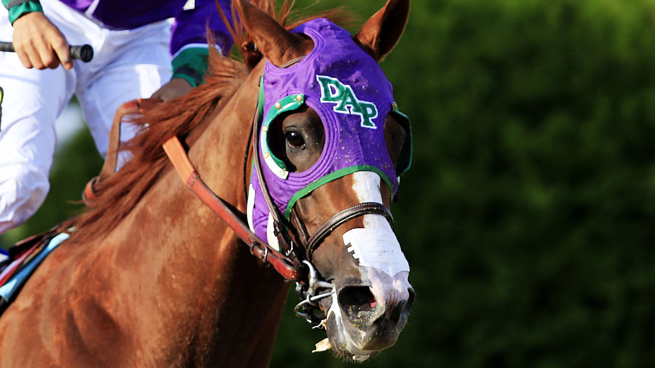 Belmont Stakes Favorite California Chrome